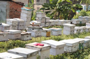 Beekeeping in Shaktikhor